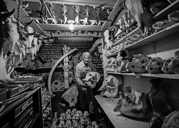 dr  bones u2026 ray bandar u2019s massive skull collection