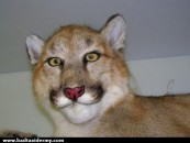 Shamefully Ugly <br/>Bad Taxidermy Part II