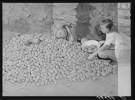 Calahan's little girl getting some of the potatoes out of the cellar of their new home. These are grown on their farm. Southern Appalachian Project near Barbourville, Knox County, Kentucky Creator(s): Wolcott, Marion Post, 1910-1990, photographer Date Created/Published: 1940 Nov.