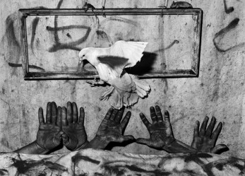 Roger Ballen's Asylum of the Birds