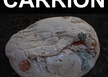 "We're All Destined to Die… RECITATION ""Carrion"" Review"