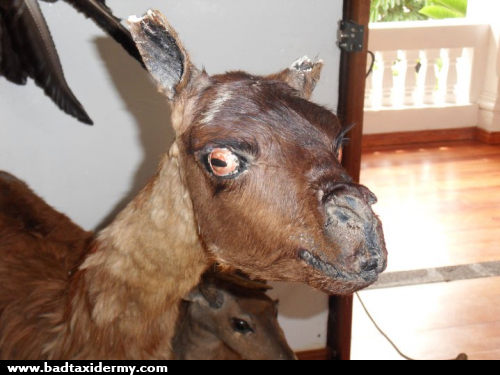 Image result for hannibal lecter taxidermy