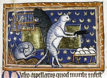 A depiction of domestic cats from an illuminated manuscript.