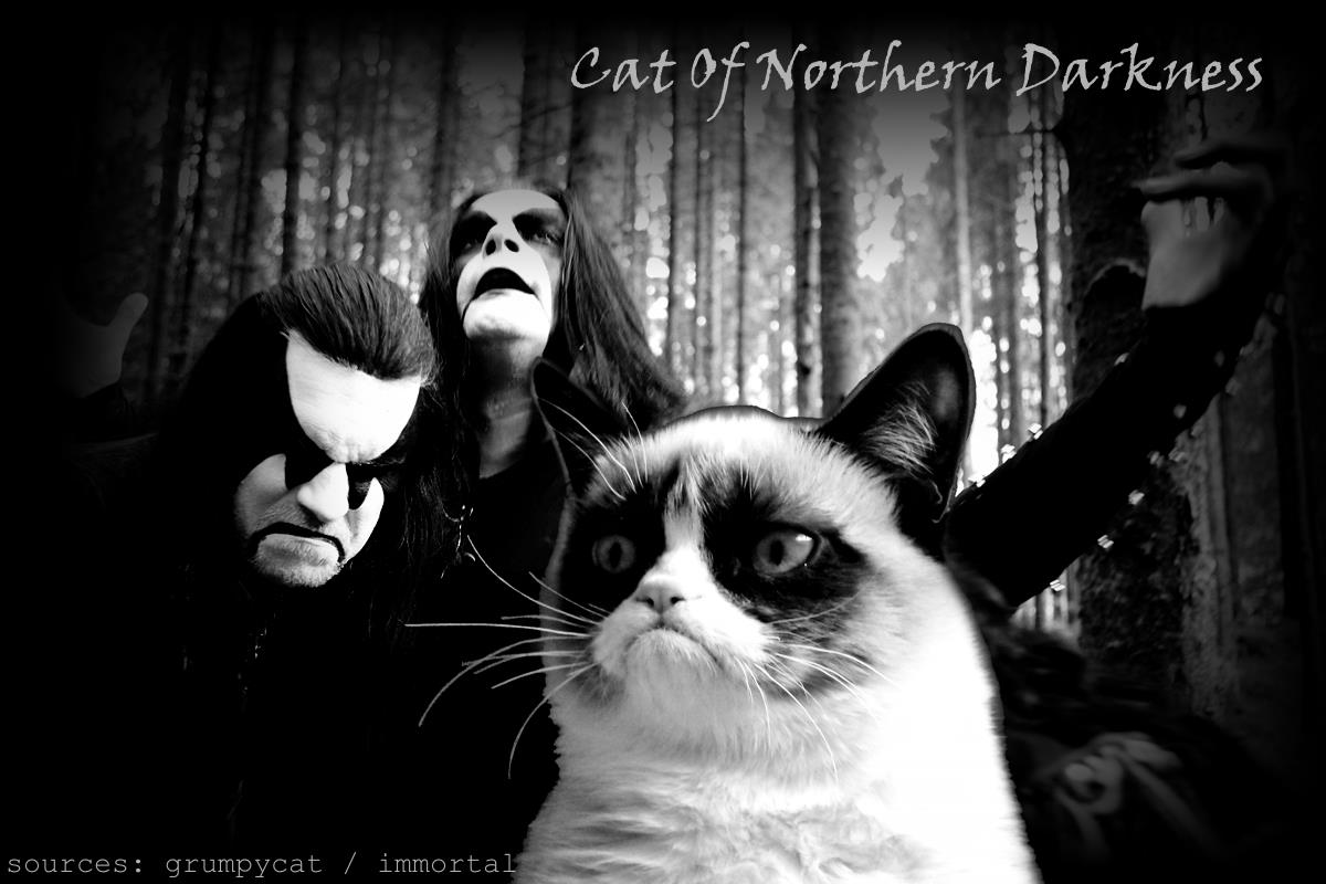 when do you neuter a cat