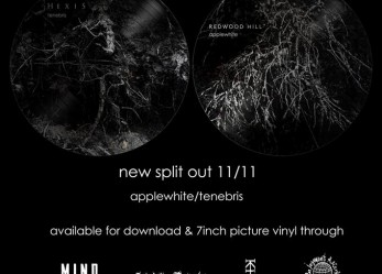 Buried in Shadows: HEXIS & REDWOOD HILL Split – Review + Stream
