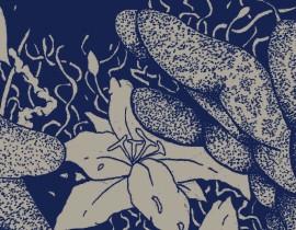Art CVLT Interview Series: <br/>Chris Alliston