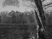 """Forever Scorned: """"Malleus Maleficarum"""" by ARGENTINUM ASTRUM – Review + Stream"""