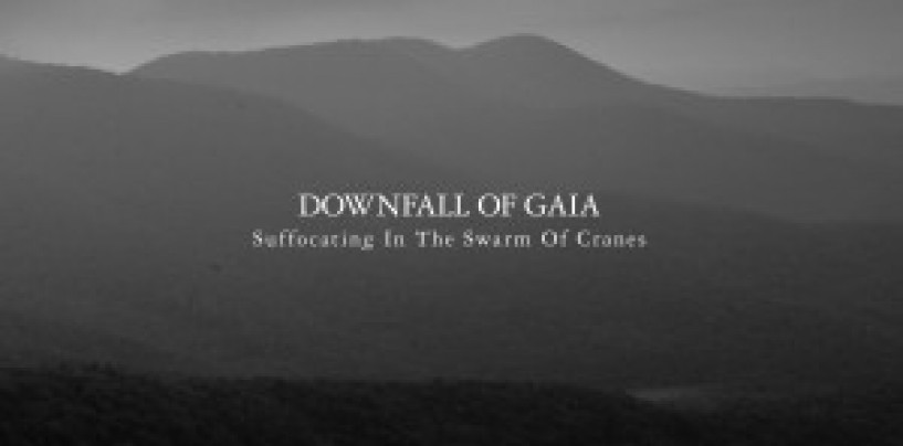Downfall of Gaia <br/>  Suffocating in the Swarm of Cranes<br/> Album Review<br/>