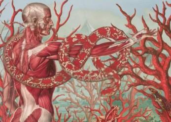Anatomical Drawings In Technicolor! <br/>Juan Gatti Art Essay