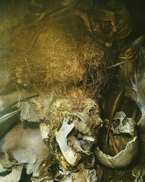 capuchin_mummies6