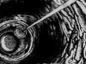 "PURE FILTH!!! <br/>CVLT Nation Streaming: <br/>Ancient Altar ""Tidal"""