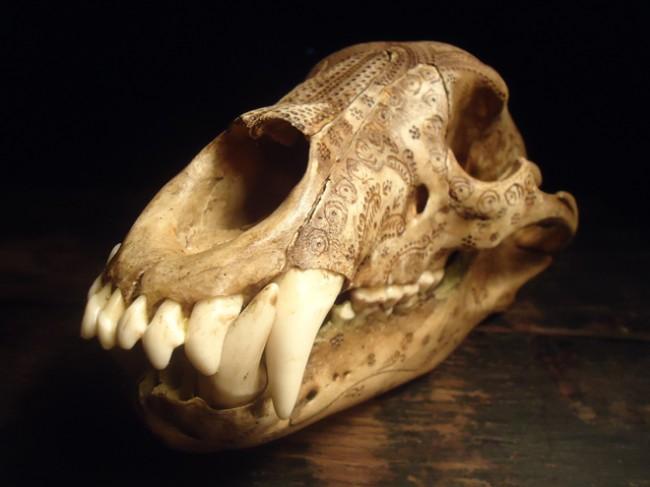 carved-bear-skull-jason-borders