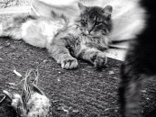 The Secret Life of Feral Cats