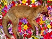 "Pet Cemetery… Maria Ionova Gribina's ""Natura Morta"""