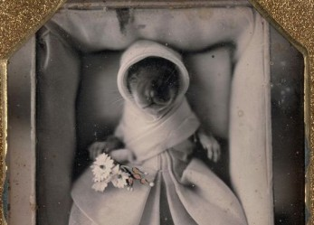 R.I.P. Man's Best Friend <br/>Post-mortem Photography <br/>Part III