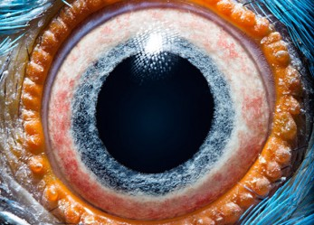 Creature Vision!<br/>Macro Photos Of ANIMALS' EYES