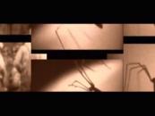 CVLT Nation Video Premiere <br/>GOG Until the Body Runs Dry