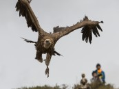 NSFW: Fed to the Vultures… Tibetan Sky Burial
