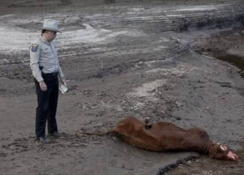 Cattle Mutilations… The FBI Files