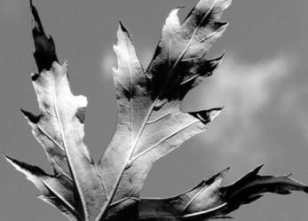 "Exclusive <br/>CVLT Nation Streaming: <br/>LYCIA ""Silver Leaf"""