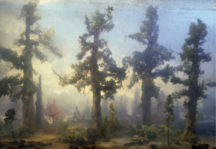 4408-forest-68c-32x45-51x72-59x83-20071