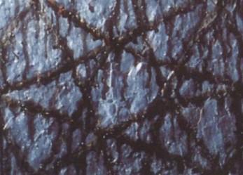 This month in Black Metal: October 1995