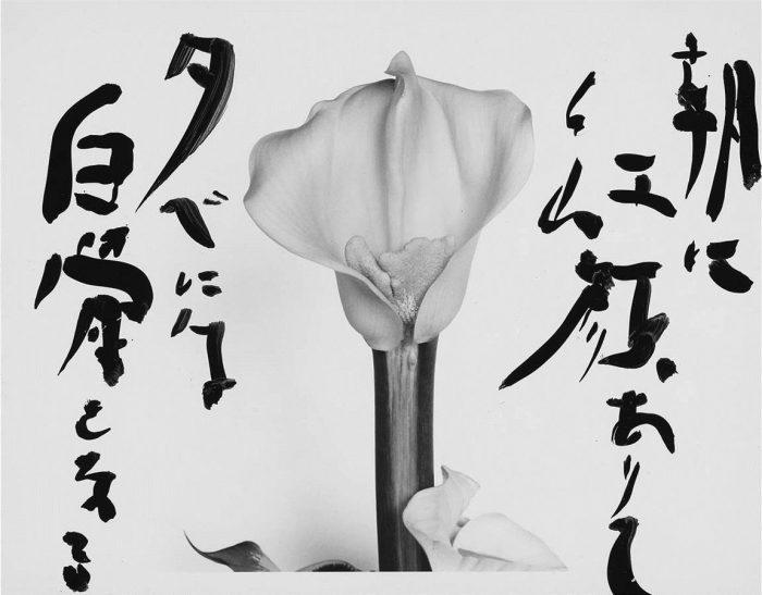Araki-Marvelous-Tales-of-Black-Ink-44-96-Custom1