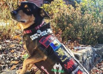 Spikes, Studs, Leather, Denim and Dogs… <br/>CVLT Nation's Favorite Instagram: Endless Blockades
