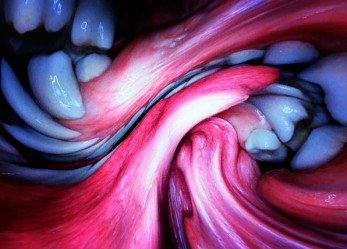 BJORK's New Video Mouth Mantra Now Showing