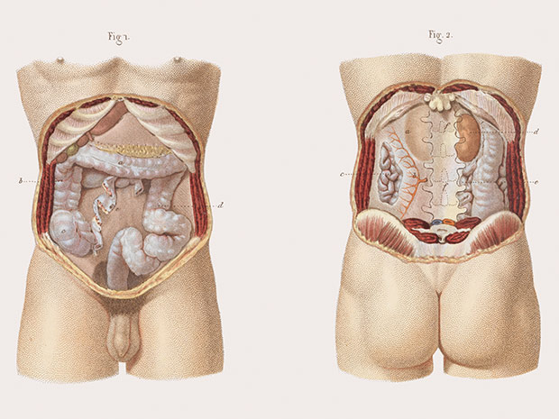 medicalillustration_crucialinterventions-anatomy-of-intestine.jpg%0A